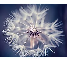Dandelion Blue Photographic Print