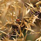 Lady bug by Jonesyinc