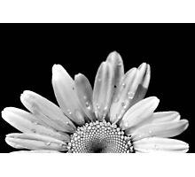 Daisy Daisy Photographic Print