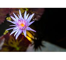 Waterlily 2 Photographic Print