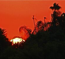 Sunset In The Bush by Chet  King