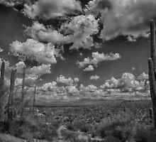 Desert Vista by Judi FitzPatrick