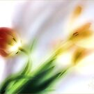 My thoughts now turn to Spring ... by LouiseK