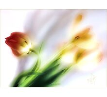 My thoughts now turn to Spring ... Photographic Print