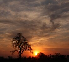 Lone Tree Sunset Botswana by richeriley