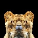 Big Cat by Phil Perkins