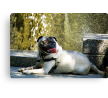 Doggy Having Fun Canvas Print