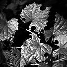 Leafcutters by Otto Danby II