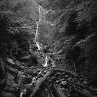Mingo Falls - Blue Ridge Mountains by Bill Wetmore