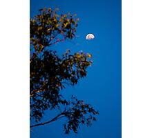 Moon and Tree Photographic Print
