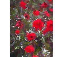 Dahlia red Photographic Print