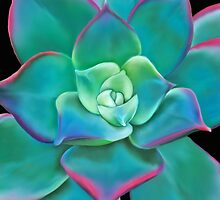 Succulent Plant by Laura Bell