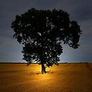 THE TREE IN THE FIELD by leonie7