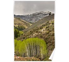 Aspens in Early Summer Storm Poster