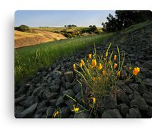 Late Poppies on North Table Mountains Canvas Print