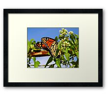 The First Monarch Framed Print