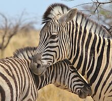 Zebra Love - Wildlife Background from Africa by LivingWild