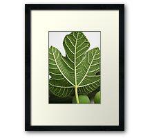 Fig Leave Framed Print
