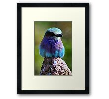 Pretty Little Bird 2 (Lilac Fronted Roller) Framed Print