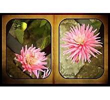 Pink Dahlias in an Old Worn Book Photographic Print