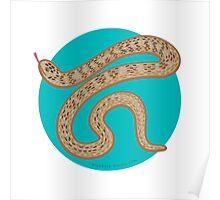Brown Snake Poster
