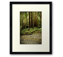 Muir Woods Sentinels Framed Print