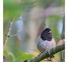 Little Bird in a Pastel Wonderland Photographic Print