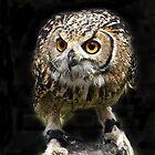 Big Eyes by John Thurgood