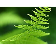 Fern Macro Photographic Print
