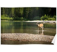 Morning Dip in Avalanche Lake Poster