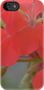 geranium neon pink by by-jwp