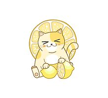 Lemon Cat Photographic Print