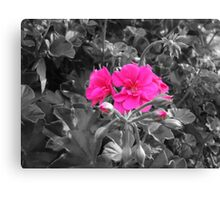 Top tags - flowers Canvas Print
