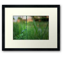 Curious Blue Framed Print