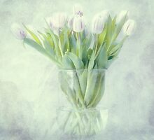 tulips by lucyliu