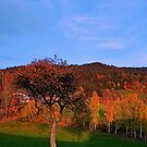 Old tree in indian summer evening   landscape photography by Patrick Jobst