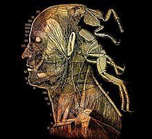 war of the flea by titus toledo