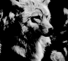 Three Brother Wolves Sticker