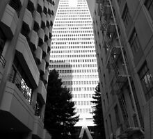 Transamerica Pyamid - San Francisco USA by Norman Repacholi