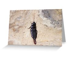 insect. Greeting Card