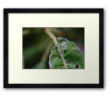 Tiny hopper on a leaf Framed Print