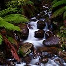 Cement Creek Cascades - Victoria Australia by Norman Repacholi