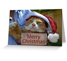 Christmas Card With Cat Greeting Card
