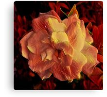 Flower at the sunset Canvas Print