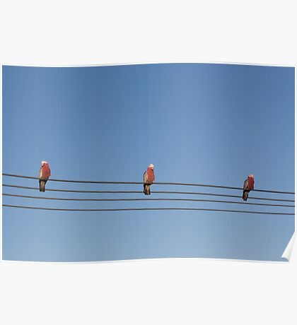 Bird on a wire. Poster