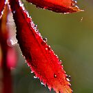 Drops of Dew by Kathleen Daley
