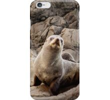 The Curious Seal iPhone Case/Skin