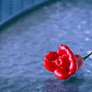 A Chilli Rose  by LouJay
