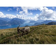 Making Friends with a Mountain Goat  Photographic Print