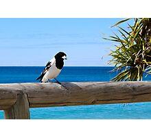 Bird Friend Photographic Print